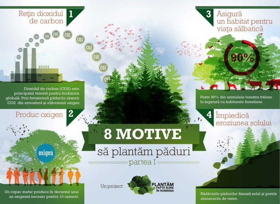 8 motive sa plantam paduri