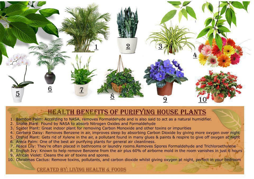 Purifying house plants Benefits
