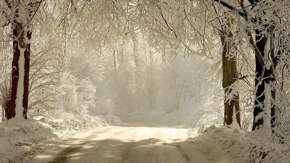 Super iarna in padure