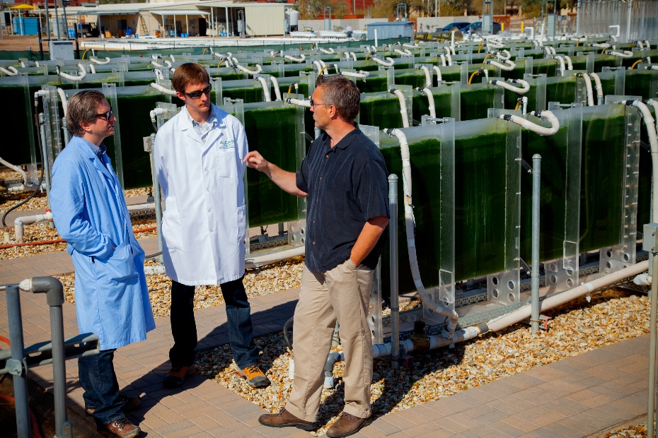 better monitoring and diagnostics tackle algae biofuel pond crash problem