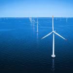 parcurile eoliene offshore ajuta la imbunatatirea vietii marine