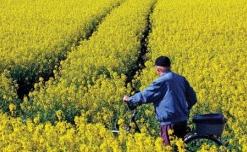 ue isi propune limitarea biocombustibililor obtinuti din culturi