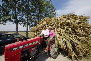 Bioenergy crops
