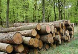 Cum ar putea fi pedepsiti hotii de lemne dupa noul Cod Silvic