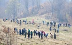 Romsilva va impaduri 1.711 hectare in aceasta toamna