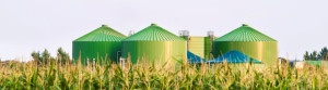 Biomass Outlook 2014 Is Biomass About To Go Bang