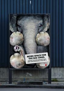 33 Campanii pro animale 11