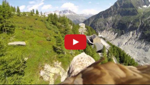 eagle camera 01