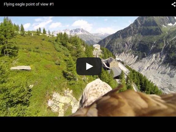 eagle camera