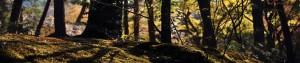 forestfloor