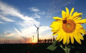 Statistics of wind power development in China 2014