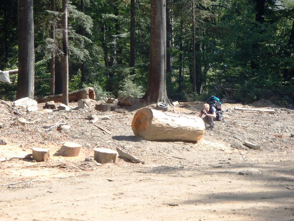 Padure virgina distrusa in Domogled National Park