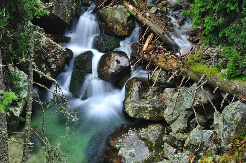 Padure virgina in Parcul National Retezat - valea Bucurei