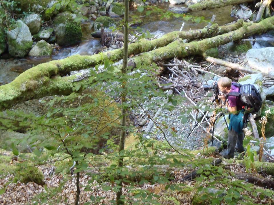 Padure virgina in Parcul National Retezat