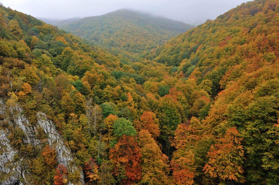 Parcul National Domogled.